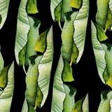 Красивая яркая картина акварели с тропическими листьями Стоковое Изображение RF