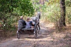 Красивая dappled-серая лошадь обузданная sulky тележкой при 3 всадника идя быстро через лес осени на жабе пыли сельской, назад стоковая фотография rf