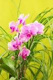 Красивая magenta орхидея стоковое изображение rf