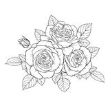 Красивая monochrome черно-белая роза букета изолированная на предпосылке иллюстрация вектора