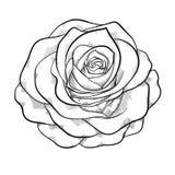 Красивая monochrome черно-белая роза изолированная на белой предпосылке бесплатная иллюстрация