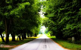 Красивая Treelined дорога стоковые фото