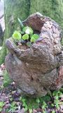 Красивая wunderful фальсификация дерева Стоковые Фото