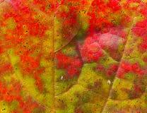Красивейшая абстрактная предпосылка кленового листа осени Стоковые Фотографии RF