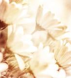 Абстрактная флористическая предпосылка Стоковая Фотография