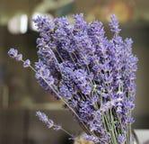 красивейшая лаванда цветков Стоковое Фото