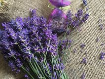 красивейшая лаванда цветков Стоковые Фото