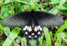 Красивейшая бабочка Стоковое Изображение