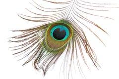 красивейшая белизна павлина пера Стоковое Фото