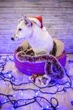 красивейшая белизна собаки фото мати шлема claus рождества младенца играя s santa совместно нося Новый Год рождества счастливое в Стоковые Фотографии RF