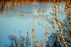 красивейшая весна ландшафта Стоковая Фотография RF