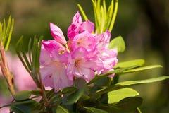 красивейшая весна цветка Стоковые Фото