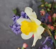 красивейшая весна цветков Стоковая Фотография RF