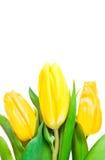 красивейшая весна цветков стоковое фото