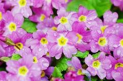 красивейшая весна цветков Стоковые Изображения