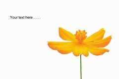 красивейшая весна цветков Стоковое фото RF