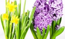 красивейшая весна цветков Стоковые Фотографии RF