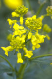 красивейшая весна цветков Стоковые Фото
