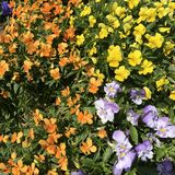 красивейшая вода солнца весны цветка Стоковое фото RF