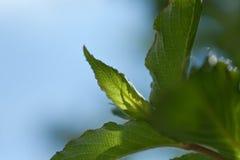Свежая весна выходит предпосылка Стоковое Изображение RF
