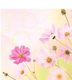 Красивейшая граница цветков Стоковые Фотографии RF