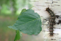 Красивейшая гусеница стоковые фото