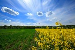 красивейшая заполированность ландшафта Стоковая Фотография RF