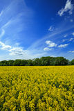 красивейшая заполированность ландшафта Стоковые Фото