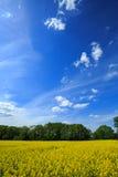 красивейшая заполированность ландшафта Стоковое Изображение