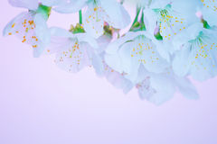 красивейшая зацветая весна цветков Стоковые Изображения RF