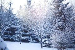 красивейшая зима восхода солнца стоковые фотографии rf