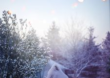 красивейшая зима восхода солнца стоковое фото rf