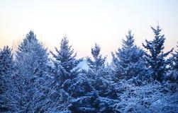 красивейшая зима восхода солнца стоковое изображение rf