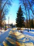 красивейшая зима парка Стоковое Изображение