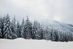 красивейшая зима пущи Стоковое Изображение