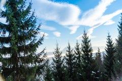 Красивейшая зима стоковое изображение