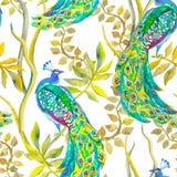 Красивейшая картина павлина безшовное тропическое Стоковые Изображения RF