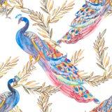 Красивейшая картина павлина вектор Павлины и заводы Стоковые Изображения