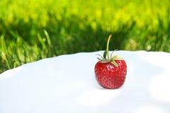 красивейшая клубника Стоковое Изображение RF