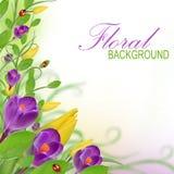 красивейшая конструкция флористическая Стоковая Фотография RF