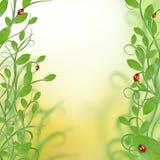 красивейшая конструкция флористическая Стоковые Изображения
