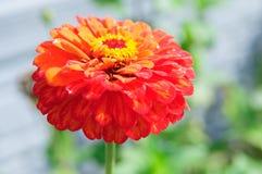 Красивейшая конструкция цветка Стоковые Изображения RF
