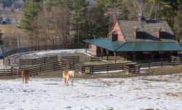 красивейшая конюшня лошади Стоковая Фотография RF