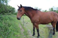 красивейшая коричневая лошадь стоковая фотография rf