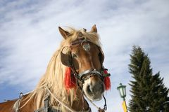 красивейшая коричневая лошадь 2 Стоковая Фотография