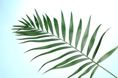 красивейшая ладонь листьев Стоковые Фотографии RF