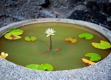 красивейшая лилия Стоковые Фотографии RF