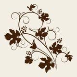 красивейшая лоза силуэта виноградины Стоковое фото RF