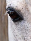 красивейшая лошадь глаза стоковое фото