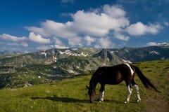 красивейшая лошадь еды Стоковое фото RF
